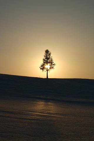 夕陽の木 The sunset tree